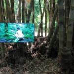1533567686979.jpg--sesso_con_piante_in_video_pubblico__furia_social_per__arte__a_palermo